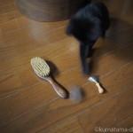 【月命日】レデッカー(REDECKER)の高級キャットブラシを受け継ぐ子猫