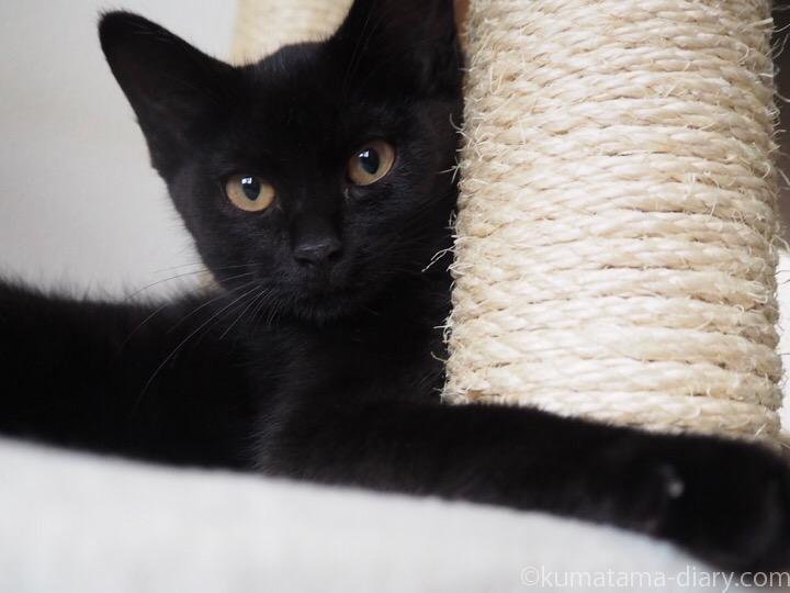 黒猫ふみお