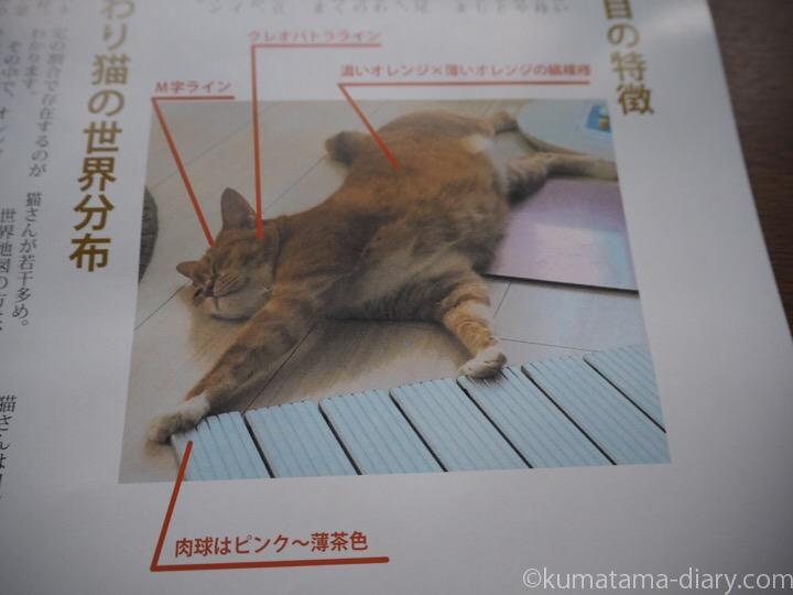 ひまわり猫の特徴