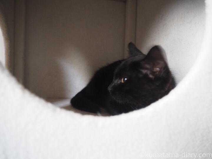 キャットタワーのボックスの子猫