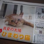 『月刊猫とも新聞』2018年8月号の特集は「ひまわり猫」です