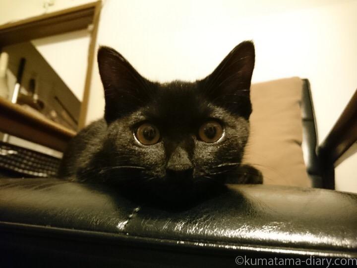 目が大きい黒猫子猫