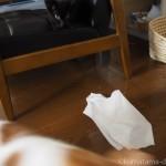 ティッシュペーパーを散らかす子猫