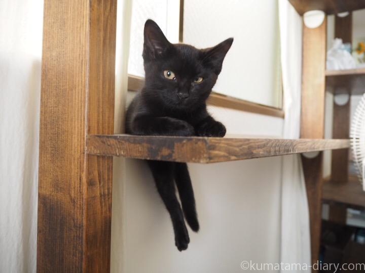 右足が落ちても気にしない黒猫子猫