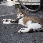 板橋区の猫さんたち