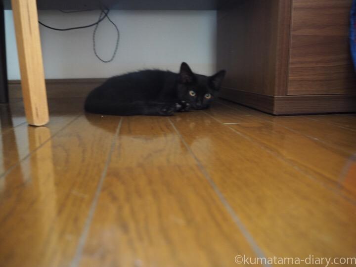 テレビ台の下の黒猫子猫