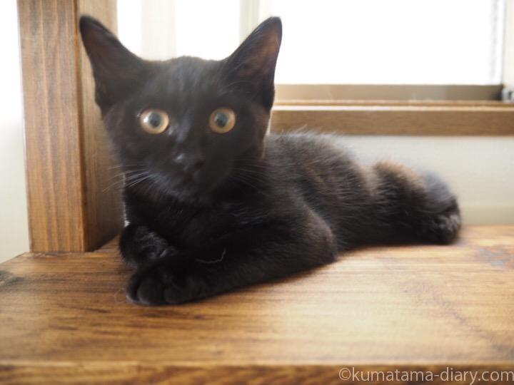 キャットウォークの黒猫子猫