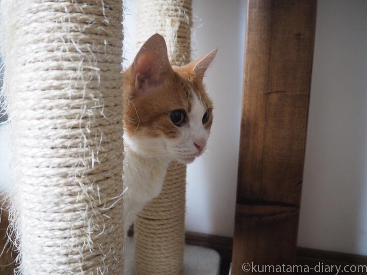 子猫を見つめるたまき