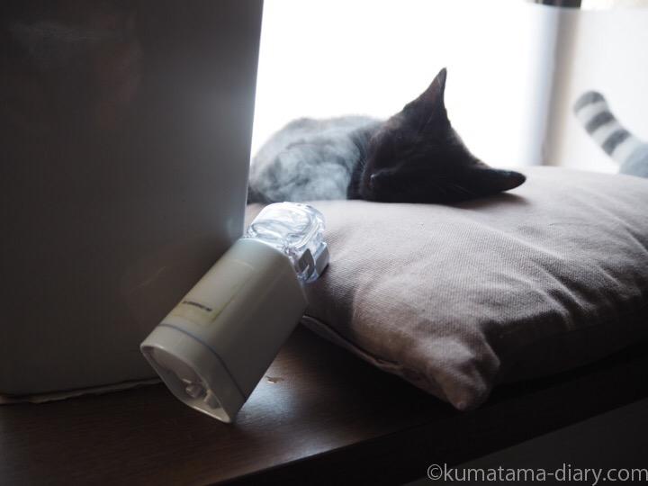ネブライザと黒猫子猫
