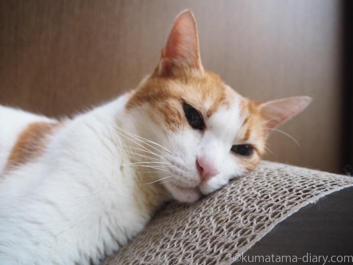 ガリガリスクラッチャーで寝るたまき顔