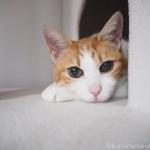 突然始まる猫の撮影会