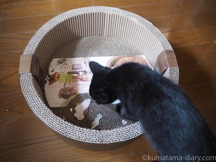 ガリガリサークルと黒猫子猫