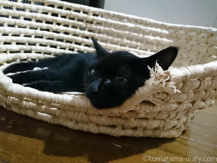 かごで寝るふみお