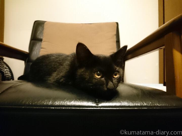 カリモクの上の子猫ふみお