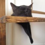 右足が落ちていても気にしない黒猫