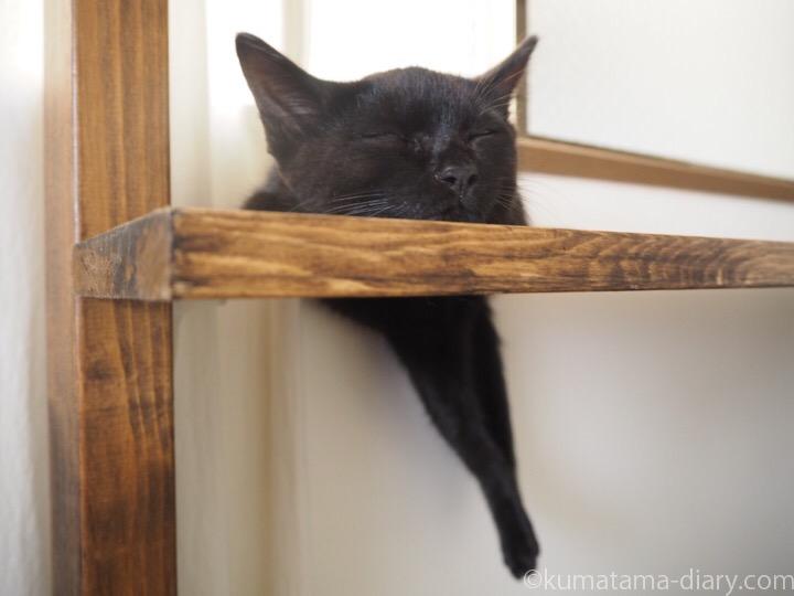 右足が落ちたまま眠る子猫