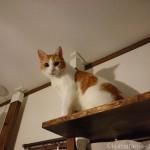 キャットタワーのハンモックに入る子猫を見つめる猫