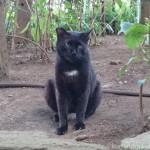 酷暑真っ只中の「白山神社」の猫さんたち