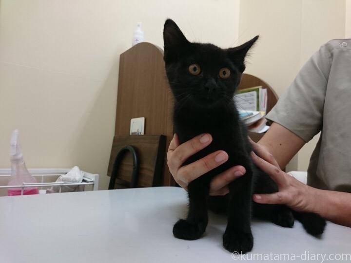 黒猫さん子猫