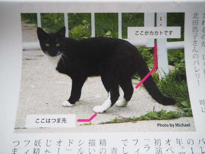 猫さんのかかと