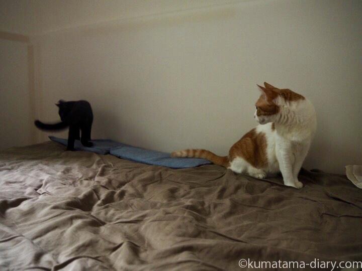 ベッドの上たまきとふみお