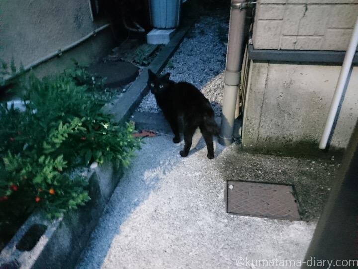 遊びに来た黒猫さん
