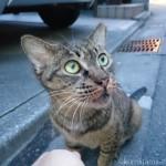 キジトラ猫さんをナデナデ&遊びに来てくれた黒猫さん