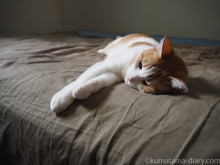 ベッドで寝転ぶたまき