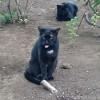 白山神社の黒猫さんたち
