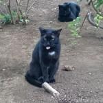 「黒猫感謝の日」の白山神社の猫さんたち