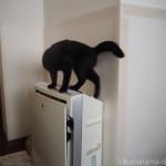 空気清浄機に乗る子猫