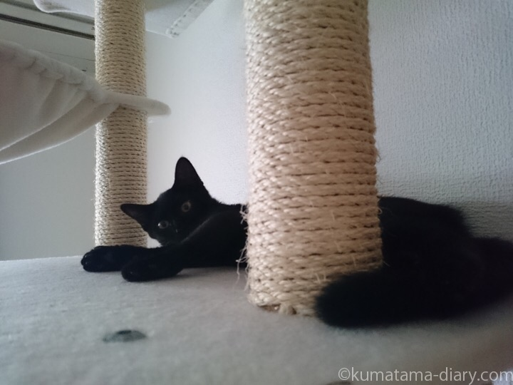 キャットタワーで寝るふみお