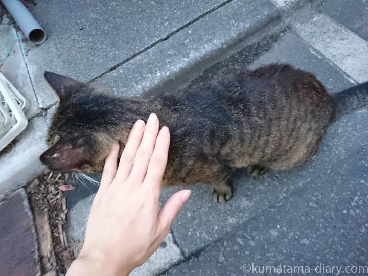 キジトラ猫さんをナデナデ
