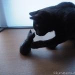黒猫の木彫りで遊ぶ黒猫の子猫