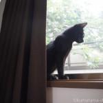 はしごから窓枠に乗る子猫