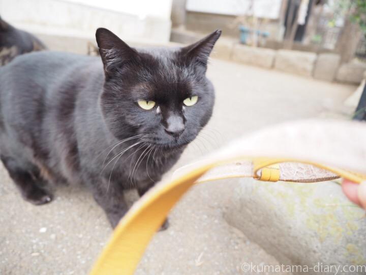 黒猫さんとストラップ