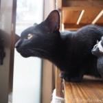 木彫り猫と一緒に外を眺める子猫