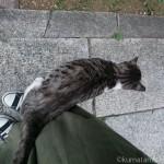 【文京区】人懐こいキジトラ白猫さんにスリスリされました