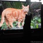 「岩合光昭の世界ネコ歩き」を見る猫たち
