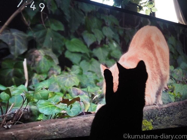 世界ネコ歩きとふみお