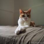 前足を伸ばして座る猫〜スフィンクス座り〜