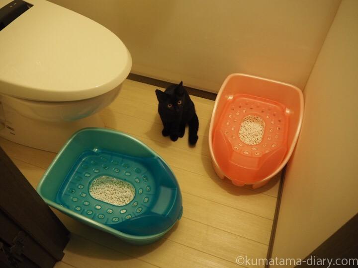 トイレのふみお