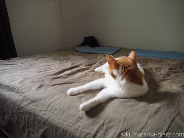 ベッドのたまきとふみお