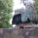 【文京区】吉祥寺の大仏と猫さんたち