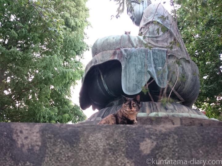 大仏とサビ猫さん