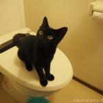 トイレで膝に乗ってくる子猫