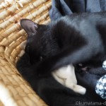 子猫が吸ってぐちゃぐちゃになった「幸せのインナーねこ」