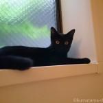 風呂場の窓台に座る子猫〜猫と一緒に半身浴〜