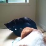 先住猫と子猫の微妙な距離感