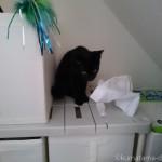 押入れでペットシーツを引っ張り出して遊ぶ子猫